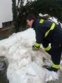 Poplavljeni podrumi 3_2_2012 (4)