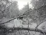 Srušena stabla prema Brebrovcu